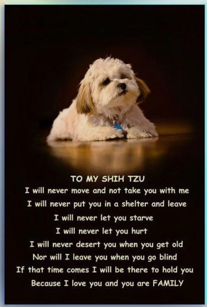 To my Max❤️🐾 | Cute dog sayings | Dogs, Cute dogs, Dog quotes
