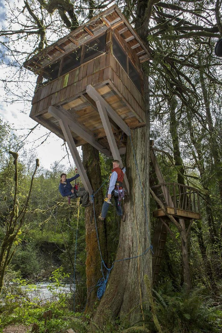 Animal Planet Has Designs For Treehouse Masters