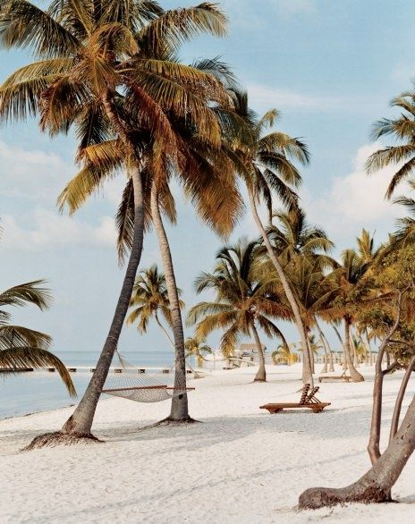 Beaches and palm trees in the Florida Keys - AWESOME!  Go to www.YourTravelVideos.com or just click on photo for home videos and much more on sites like this.
