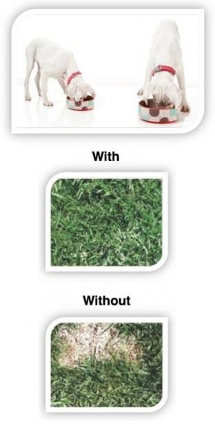 27 Best Images About Grass Burn On Pinterest Dog Urine
