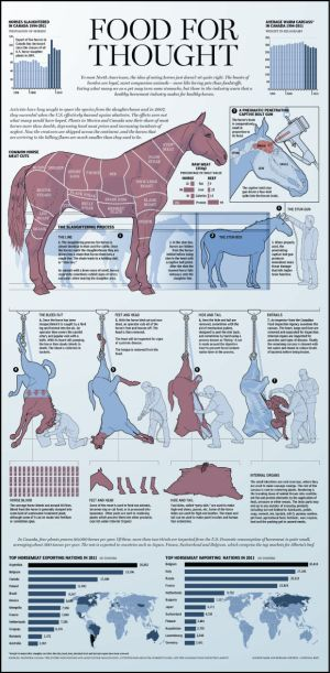 Graphic: Horse meat – from field, to truck, to slaughterhouse, to the plate