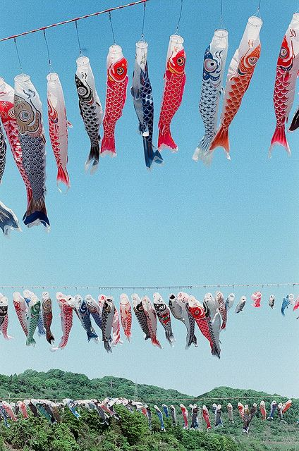 carp banners: photo by toricocco, via Flickr