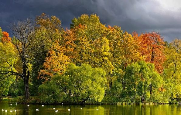 Фото обои фото, деревья, утки, река, лес