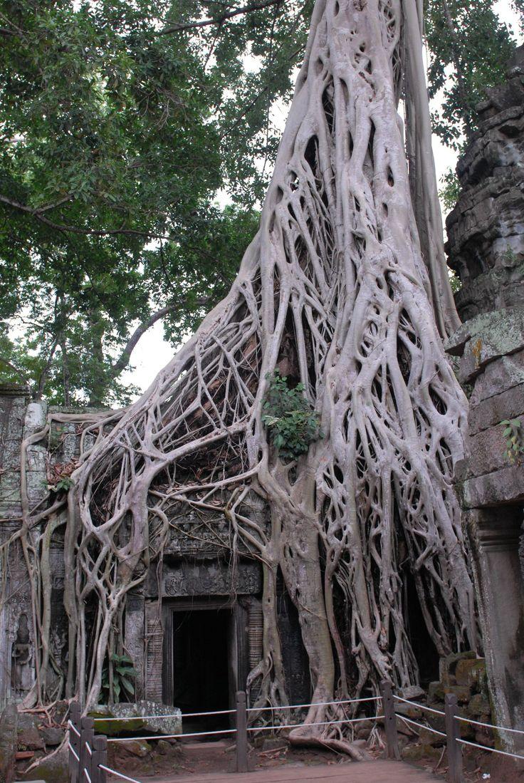 cambodge 3 081
