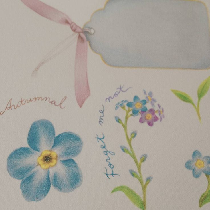 #forgetmenot #colorpencil work #물망초 #색연필일러스트 https://www.behance.net/thedrawingpencils