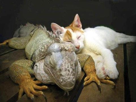 Unique friendship