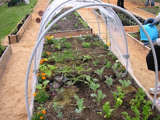 22 best images about Gardening Community Garden on Pinterest