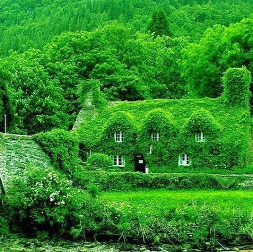 A 500-year-old teahouse in Wales.