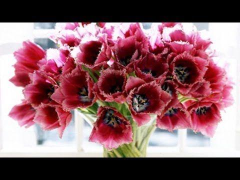 Fresh Wie Sie Blumen l nger haltbar machen Diy GartenWdr