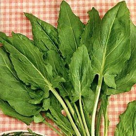 ÄNGSSYRA i gruppen Krydd- och Medicinalväxter / Kryddväxt hos Impecta Fröhandel (3368)