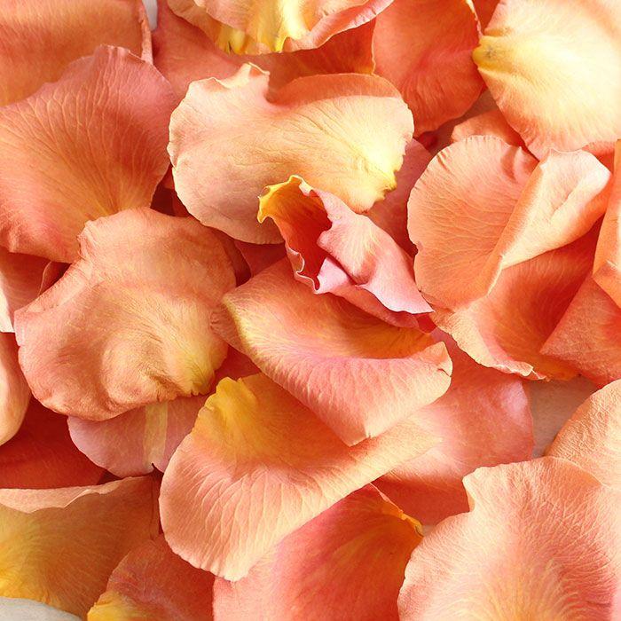 Freeze Dried Rose Petals in Peach - 8 Cups