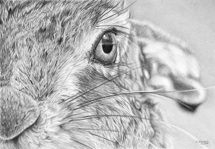 """I See You"" this new drawing is one of my favourites...I really enjoyed the…"