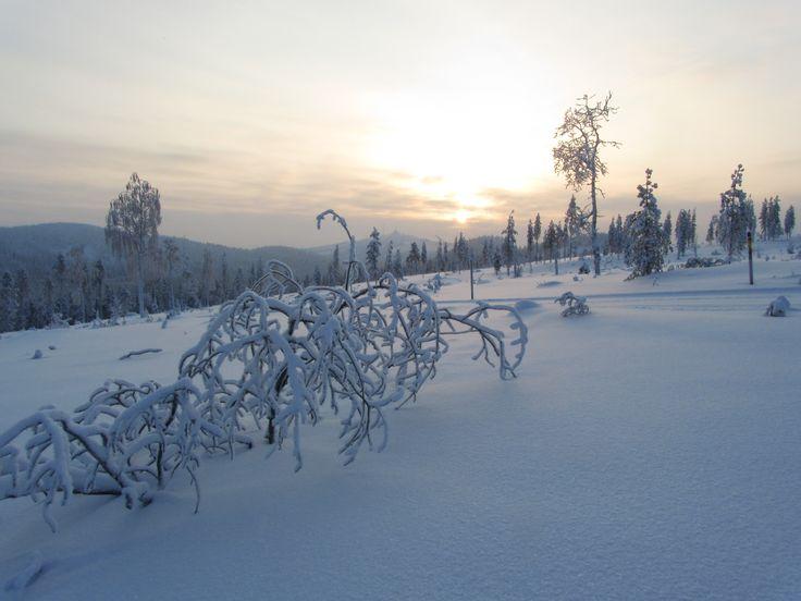 Scenery near Valkeaisenvaara, Ruka