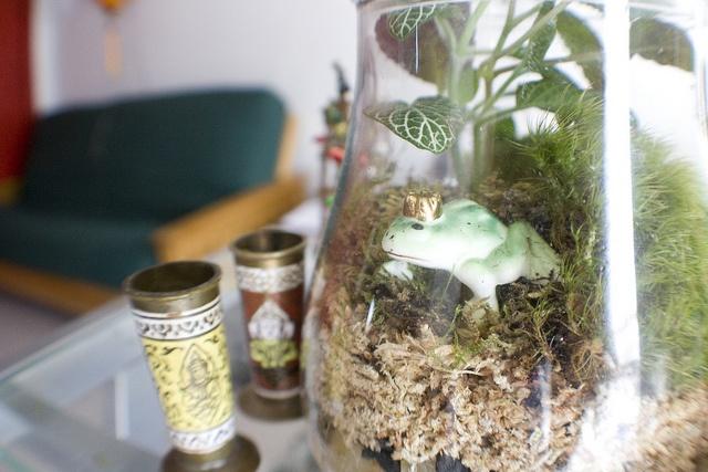Prince Frederick terrarium from Nicola