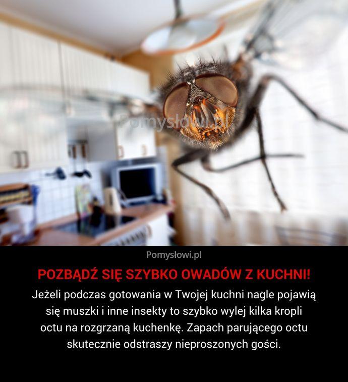 Jeżeli podczas gotowania w Twojej kuchni nagle pojawią się muszki i inne insekty to szybko wylej kilka kropli octu na ...
