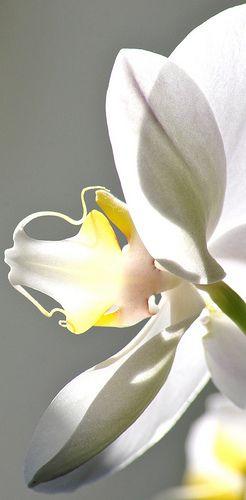 Sheer Wrap - Orchid Melody 5 by VIDA VIDA g0KaXOE66L