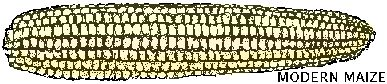 NativeTech: Native American History of Corn