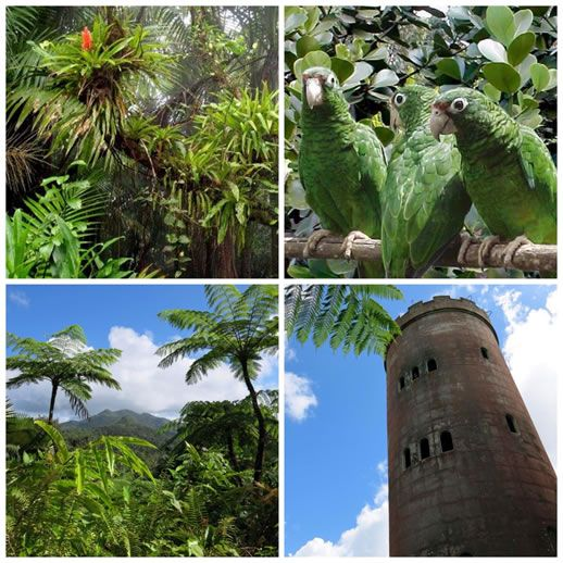 Four images from around the forest: tropical flower, parrots, tropical trees, brick tower at El Yunque rainforest in Puerto Rico
