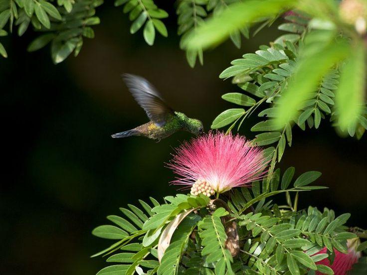 The flora and fauna of Tobago, Tobago, Caribbean - Tropical Sky