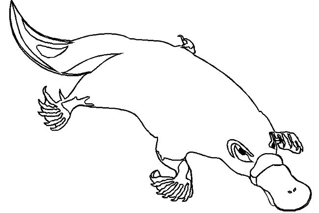 free platypus coloring pages - photo#6