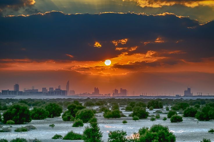Mangrove by Tamer Zourob on 500px