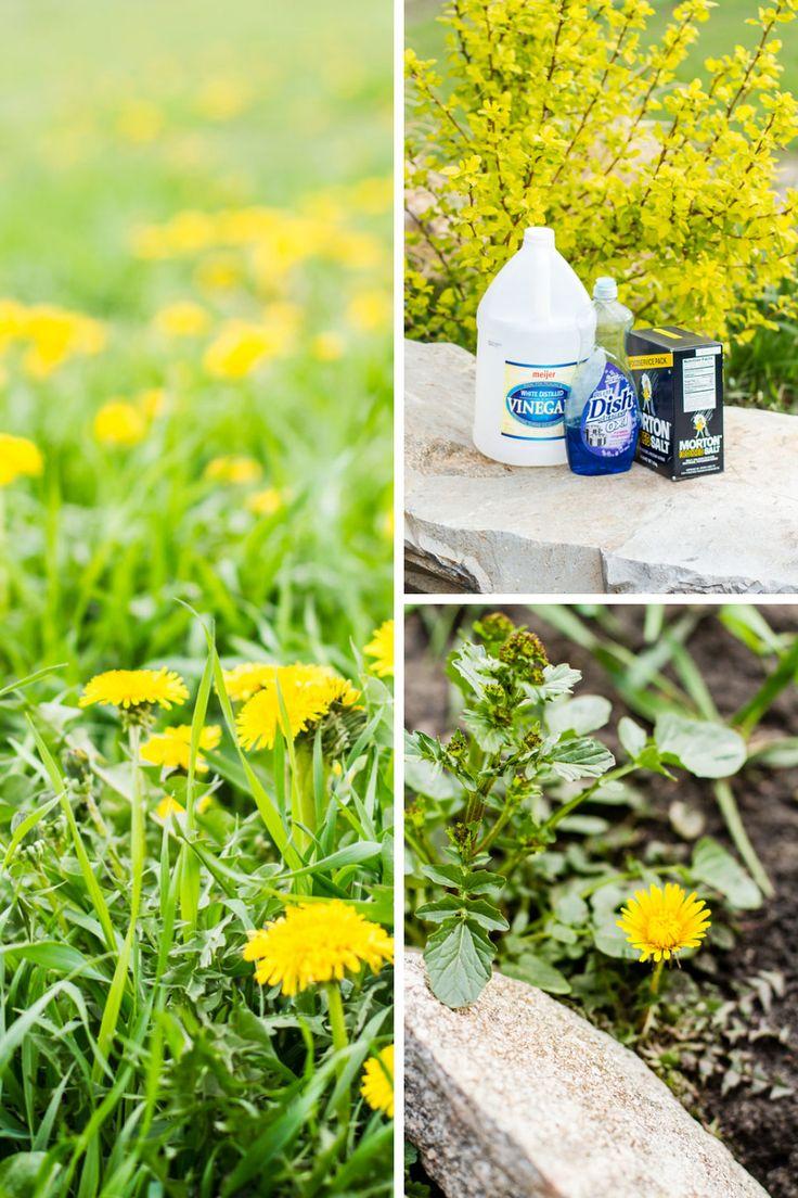 Weeds in flower beds organic killer - Weeds In Flower Beds Organic Killer 47