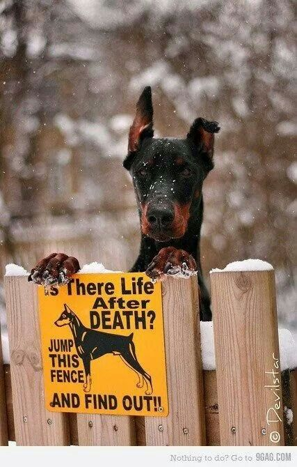 Doggie....
