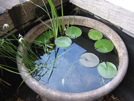 25 best ideas about container water gardens on pinterest for Container ponds with fish