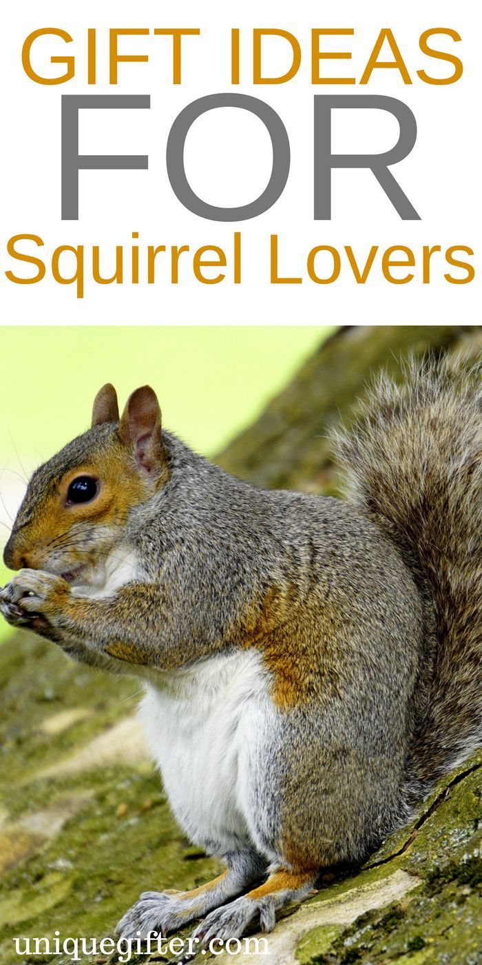 Gift Ideas for Squirrel Lovers   Squirrel Clothing   Squirrel Jewelry   Squirrel Gifts for Teachers   Squirrel Gifts for Kids   Squirrel Gift Baskets   Squirrel Christmas Presents   Squirrel Mother Day   Squirrel Father's Day   Fun Squirrel Gifts   Awesome Gifts for Squirrel Lovers   Squirrel Books   Squirrel Prints   What to Buy for People Who Love Squirrels   The Best Squirrel Gifts   Gift Ideas   Gifts   Presents   Birthday   Christmas