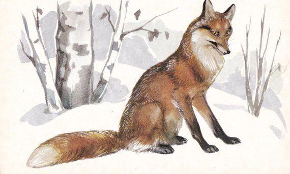 Northern Animals. Drawings by M. Alexeyev, N. Stroganova. Complete Set of 16 Prints, Postcards in original cover -- 1972