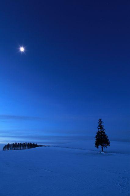 Christmas tree  - Winter in Biei, Hokkaido, Japan