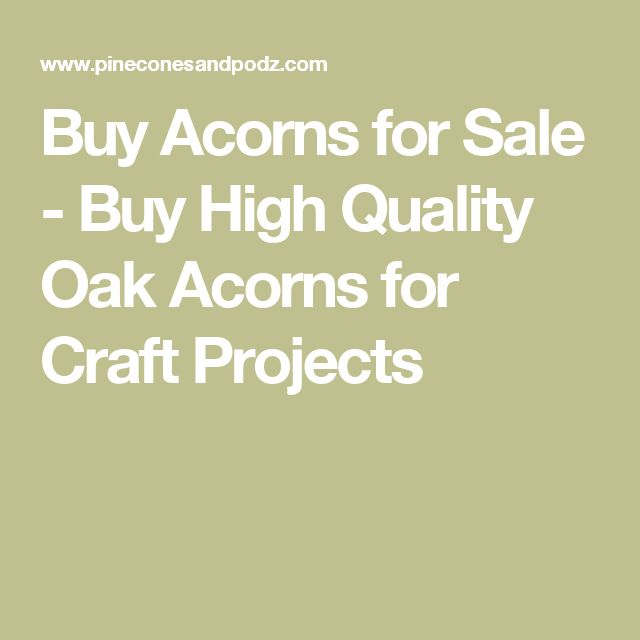 Buy Acorns for Sale - Buy High Quality Oak Acorns for Craft Projects