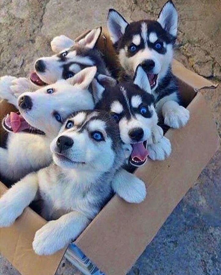 Just received my Dog Sled Team Kit in the mail. #excited