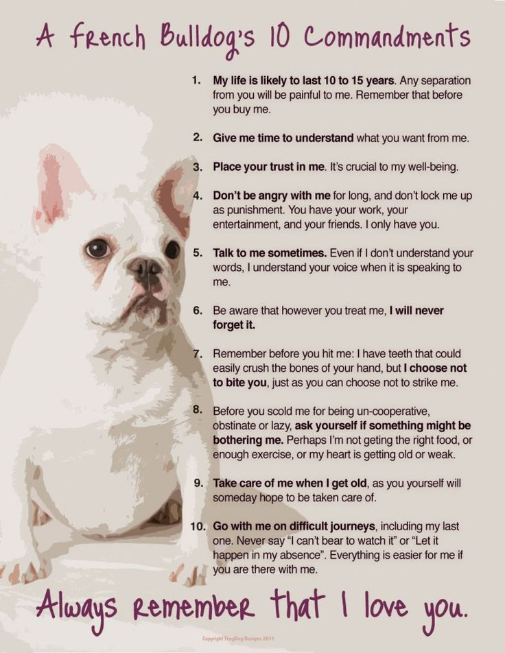 Omg, this should be an all-dog list. Some of these things upset me like: why wouldn't/would a pet owner do this? Very sweet otherwise.