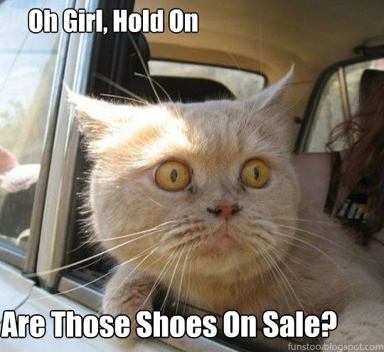 quotes about shoes | Funny Cat - Oh Girl, Hold On - Are Those Shoes On Sale