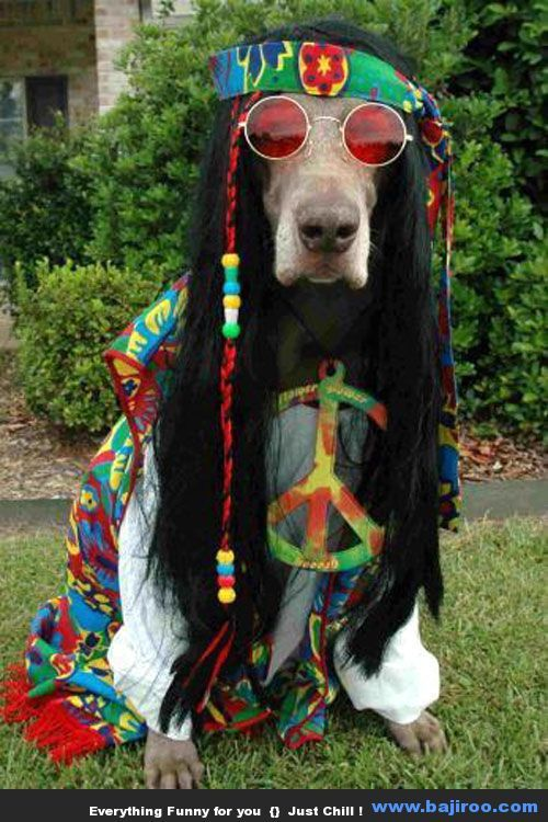 Best Collection of Dogs in Costumes You Never Know (50 Photos)