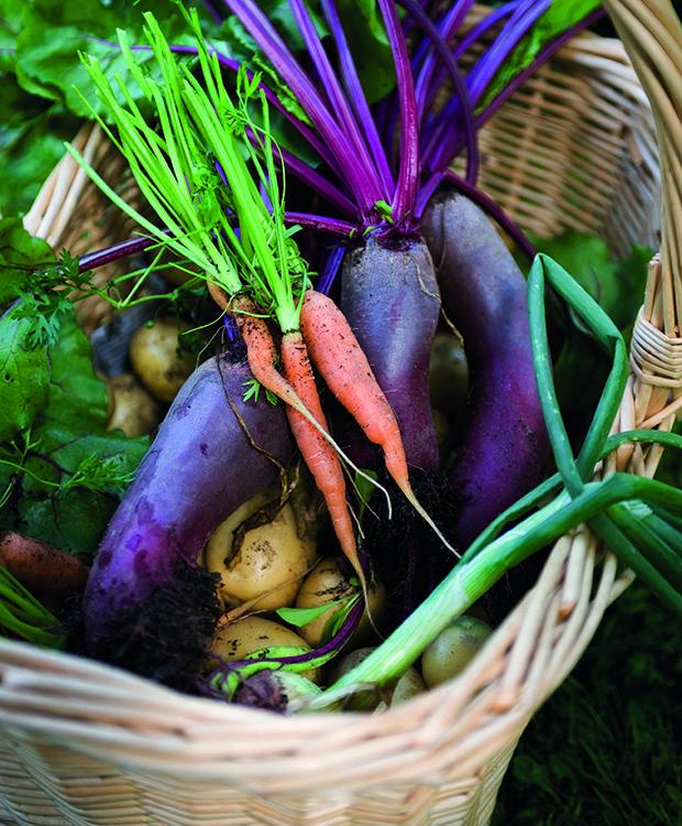Vil du have en køkkenhave med mindst muligt besvær? Prøv en af vores tre strategier til en nem spiselig have.