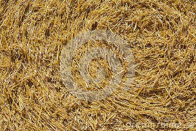 Wheat straws background
