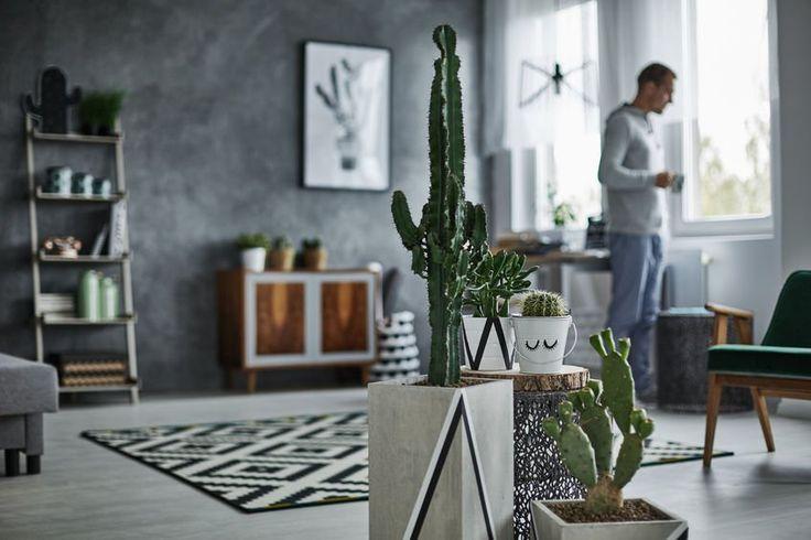Salon miłośnika kaktusów. #design #urządzanie #urząrzaniewnętrz #urządzaniewnętrza #inspiracja #inspiracje #dekoracja #dekoracje #dom #mieszkanie #pokój #aranżacje #aranżacja #aranżacjewnętrz #aranżacjawnętrz #aranżowanie #aranżowaniewnętrz #ozdoby #kaktus #kaktusy #roślina #rośliny #roślinność #kwiat #kwiaty #salon #salony