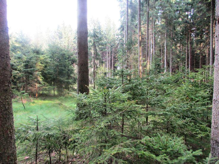 Les v Rumburku - severní Čechy