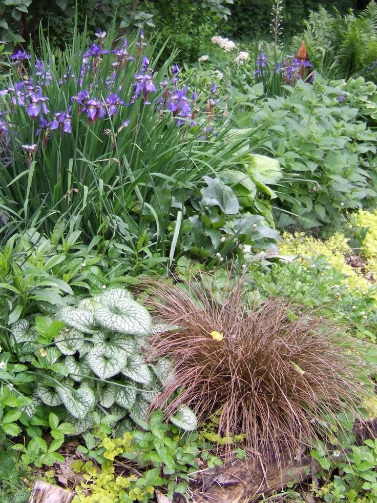 17 best images about grass plants on pinterest gardens for Ornamental grasses that grow in shade