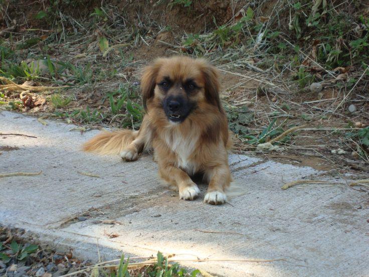 Fotogénico perro quiltro de Punucapa