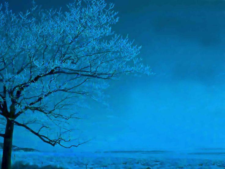 Winter blue tree: Blue Sky, Beautiful Blue, Color, True Blue, Blue Trees, Blue Winter, Blue Moon, God Promi, Blue Things