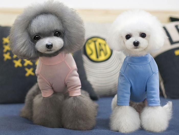 Interesting So Cool Sweat Breathable Pet Clothes Teddy Dog Clothes Puppy Sunscreen Clothes With Images Teddy Dog Pet Clothes Dog Clothes