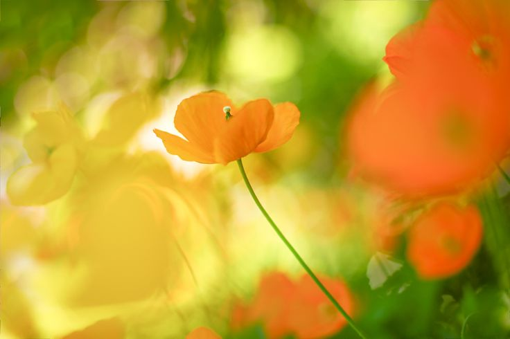 Hello Sunshine by Kimber Leigh - Photo 157558501 - 500px