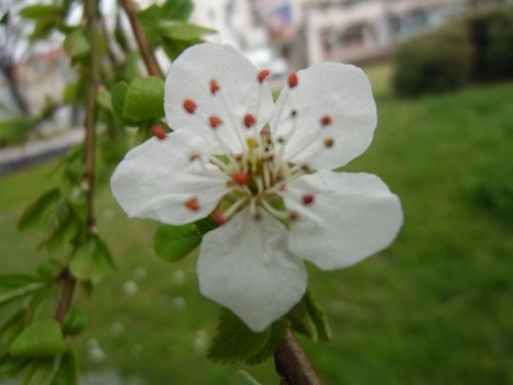 Tavasz / Spring