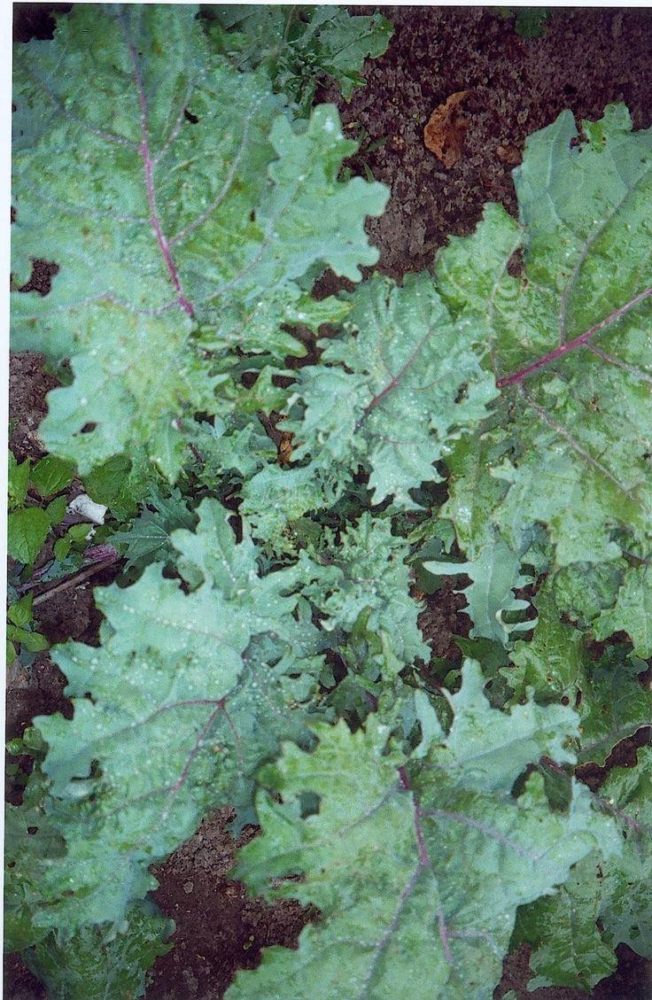 15224 best grow a winter garden images on pinterest winter
