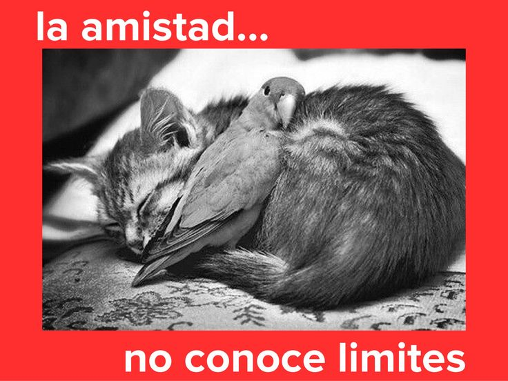 La Amistad no conoce límites....