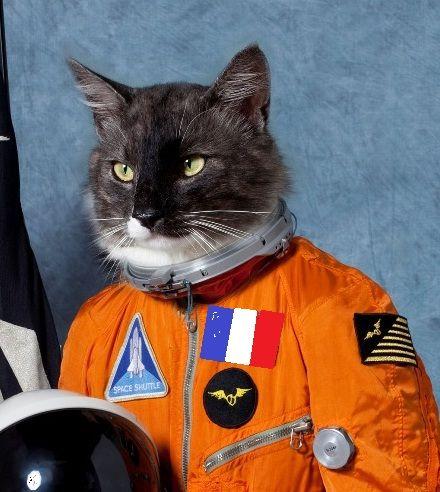 cat astronaut | Vontade de cair para cima | Pinterest