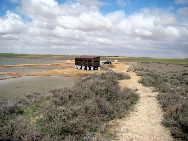 Laguna de Peñahueca. Villacañas (Toledo).  Humedal hipersalino con una superficie de 120 ha., que forma parte de la ZEPA-LIC Humedales de La Mancha de la Red Natura 2000, Reserva de la Biosfera.   Se realizaba extracción de sal.  En ella se pueden encontrar especies como la Suaeda vera (Forssk. ex J.F.Gmel.), y otras plantas halófitas.  También es importante la observación de aves como los flamencos, las grullas y pagazas.